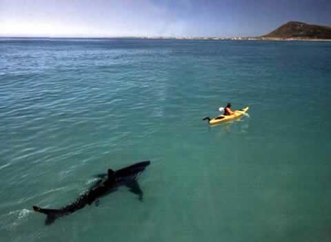 Remote viewing a shark and kayaker