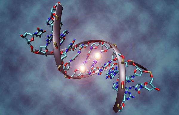 DNA-molekyl. Illustration: Christoph Bock. Licens: CC BY-SA 3.0, Wikimedia Commons