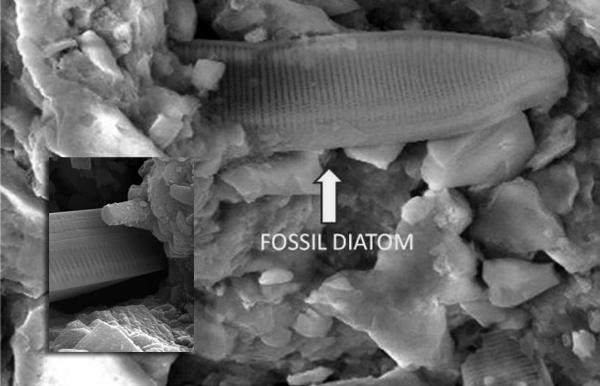 Diatom fossil meteorit