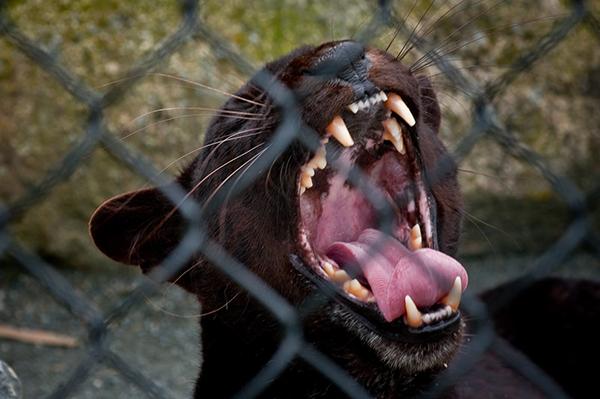 Leo-Druker-black-Puma