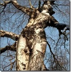 Bildtext: Kvinnlig björk. Liksom på träd kan svampar också växa på människokroppen