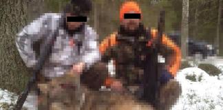 Olaglig vargjakt - grovt jaktbrott