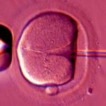 Embryo - Photo: David Gregs,    Alamy