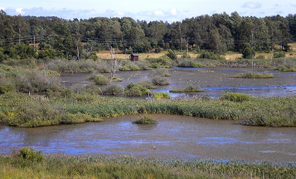 Våtmark på Muskö,   Arbottna - Foto: Torbjörn Sassersson
