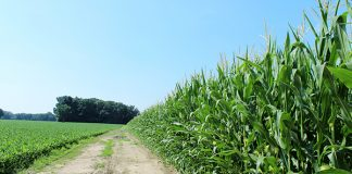 Corn Soybeans, Pittsfield, Township, Michigan. Foto: Wikimedia Commons