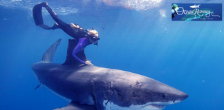Ocean Ramsey with white shark - Photo: Oceanramsey.com