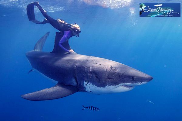 Ocean Ramsey with white shark - Photo: Oceanramsey.com