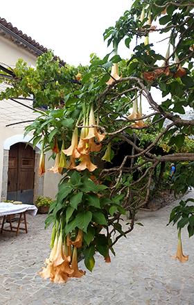 Casbernats, Mallorca 7 okt 2015 - Foto: Fride Sassersson