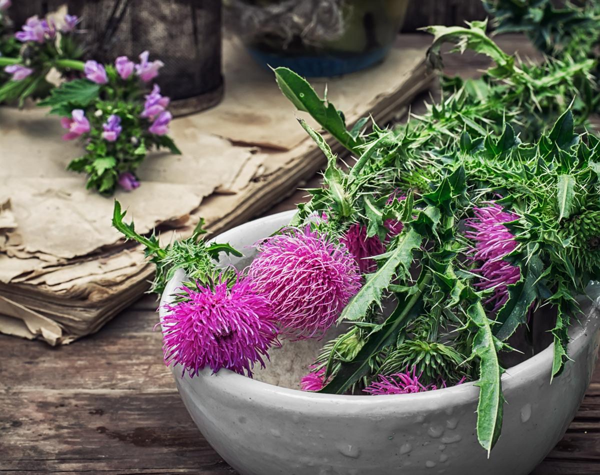 Mariatistel alternativmedicin - Foto: Crestock