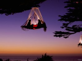 Tree camping - Foto: Caters News Agency