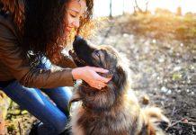 Husdjur hund - Foto: Crestock.com