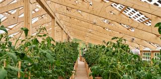 Ett av ETC:s växthus - Foto Fredrik Olsson