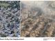 Kalifornien, bränderna 2017 - Bild: Google Maps, Golden Gate Division