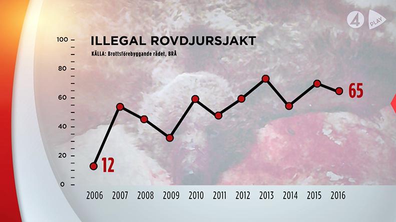 Olaglig jakt ökar i Sverige -TV4 Play