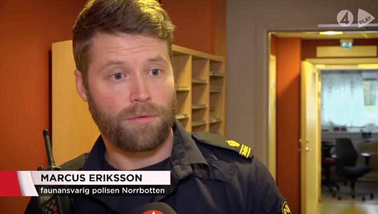 TV4 Pay om olaglig jakt i Sverige