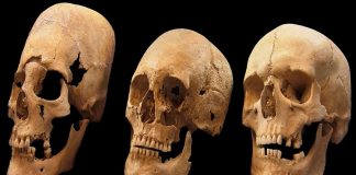 Elongated skulls mystery - Foto: pnas.org