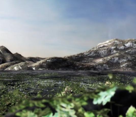 Svamparnas planet - Källa: Vetenskapen värld, SVT