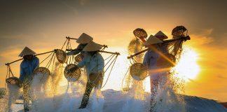 Bild: Skörd av havssalt i Vietnam. Foto: Quangpraha, licens CC0 1.0