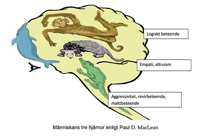 Människans tre hjärnor enligt Paul D. MacLean