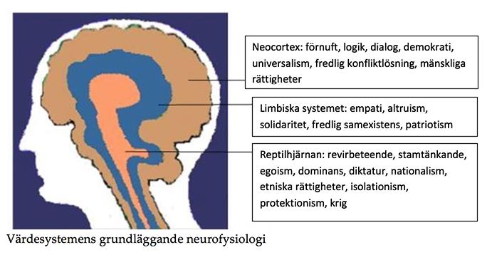 Värdesystemens grundläggande neurofysiologi