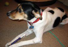 Hundar kan få tandsten. Foto: Linda N. Licens: CC BY 2.0, Flickr.com