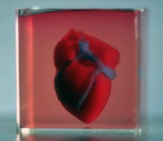 Printed 3D-heart. Image credit: AdvancedScience.com (Onlinelibrary.wiley.com)