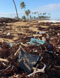Plastics in nature. Foto: Dustan Woodhouse. Licens: Unsplash.com (free use)