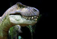 Tyrannosaurus Rex. Foto: Jim Tsorlinis. Licens: Pixabay.com (free use)