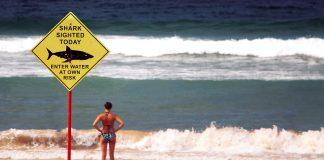 Shark warning. Foto: Lubo Minar. Licens: Unsplash.com (free use)