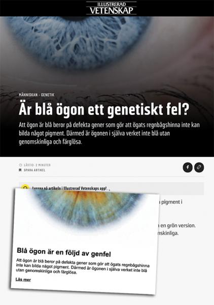 """""""Blå ögon är en följd av genfel"""", enligt Illustrerad Vetenskap. Skärmdumpar från tidningens artikel och nyhetsbrev."""