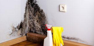 Mögel på en vägg. Foto: Clean First. Källa: Flickr.com. Copyright: Clean First (company)