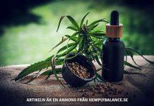 Cannabis CBD-olja. Foto: Julia Teichmann. Licens: Pixabay.com