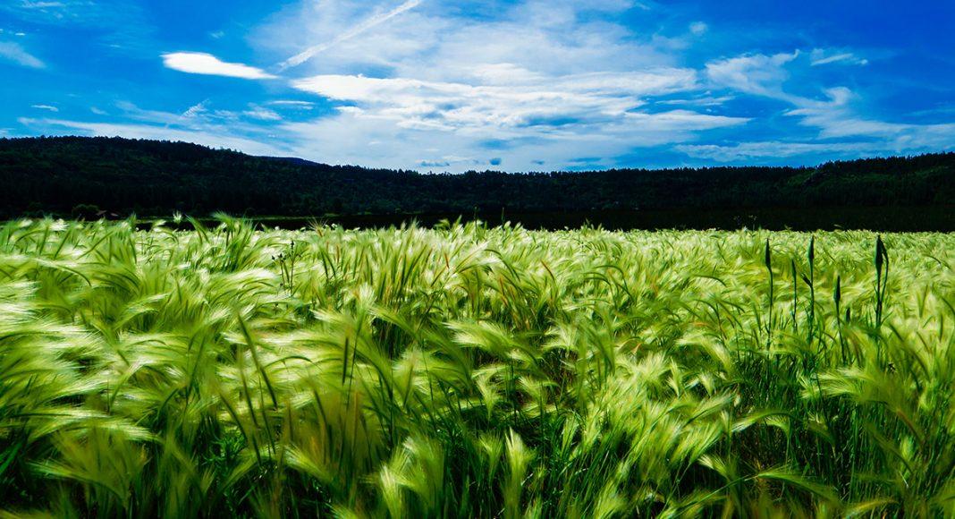 Farming, jordbruk. Foto: Thomas Pierre. Licens: Unsplash.com