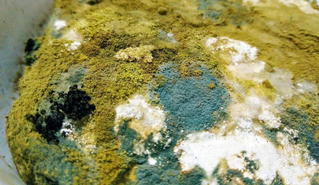 Mögel och mykotoxiner på brödskiva. Foto: Sonali Thimmiah. Licens: CC A 4.0 Int. (Creative Commons)