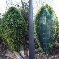 """""""Sändarbuske"""" (fram och baksida) bredvid mobilmast i Opede, Provence, Frankrike, feb 2020. Foto: Torbjörn Sassersson"""