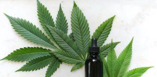 CBD-olja, cannabisolja. Foto: Kimzy Nanney