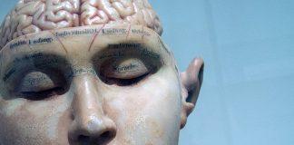 Rätt näring till hjärnan. Foto: David Matos. Licens: Unsplash.com