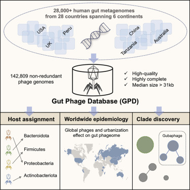 Gut Phage Catalog