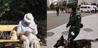 En äldre person (foto: StockSnap) och en japansk polishund, som ej är relaterad till denna artikel (foto: Äldre person (foto: StockSnap, Pixabay.com) och en japansk polishund som ej är relaterad till artikeln (foto: Dick Thomas Johnson, CC 2.0)