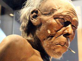 Homo sapiens, modell. Foto (beskuret): Emőke Dénes. Licens: CC BY-SA 4.0, Wikimedia