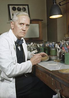 Alexander Fleming - Penicillin - Foto: Wikimedia Commons - Imperial War Museums